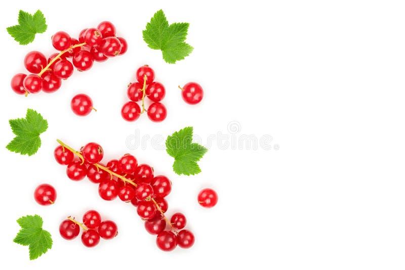 Μούρο κόκκινων σταφίδων με το φύλλο που απομονώνεται στο άσπρο υπόβαθρο r Επίπεδος βάλτε το σχέδιο απεικόνιση αποθεμάτων
