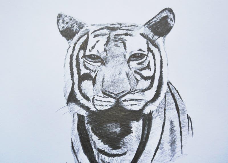 Μολύβι πορτρέτου προσώπου τιγρών που επισύρει την προσοχή σε χαρτί στοκ φωτογραφίες