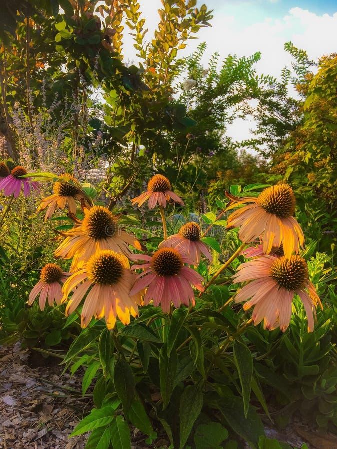 Μπάλωμα λουλουδιών στοκ εικόνες