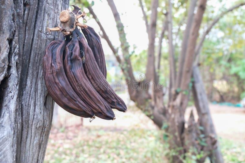 μπανάνα σάπια στοκ εικόνες