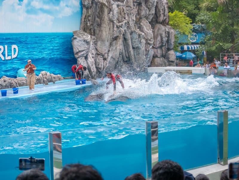 ΜΠΑΝΓΚΟΚ, ΤΑΪΛΑΝΔΗΣ - 16.2018 ΙΟΥΝΙΟΥ: Τα δελφίνια παρουσιάζουν στον κόσμο σαφάρι Η ευφυέστερα ικανότητα και τα τεχνάσματα παρουσ στοκ εικόνα με δικαίωμα ελεύθερης χρήσης