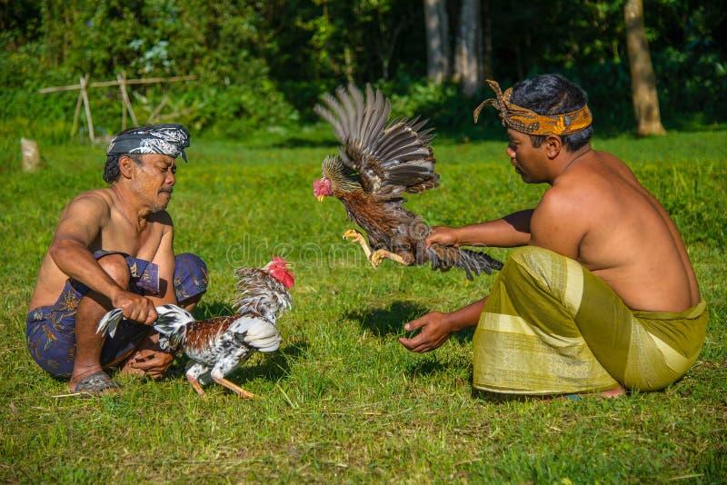 Μπαλί, Ινδονησία - 2 Μαΐου 2014 - ινδονησιακοί χωρικοί Unindentified που οργανωμένη cockfight στοκ εικόνα