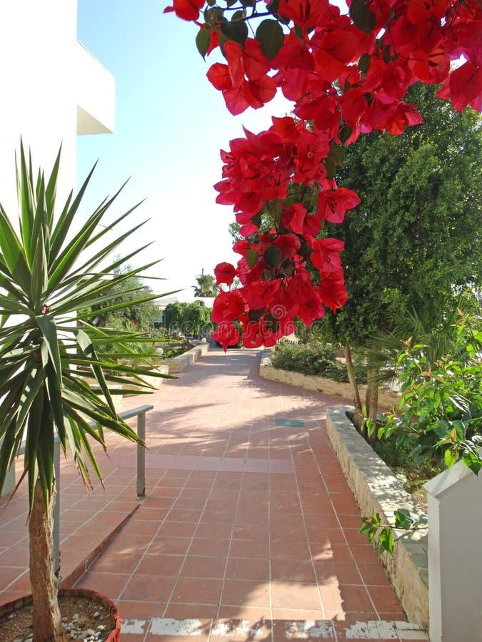 Μπαλκόνι οικοδόμησης ξενοδοχείων πολυτελείας και santorini Ελλάδα πεζουλιών στοκ φωτογραφία με δικαίωμα ελεύθερης χρήσης