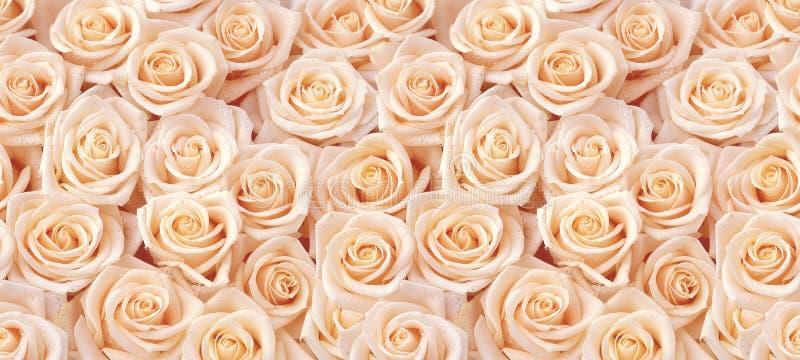 Μπεζ άνευ ραφής σχέδιο τριαντάφυλλων στοκ εικόνα