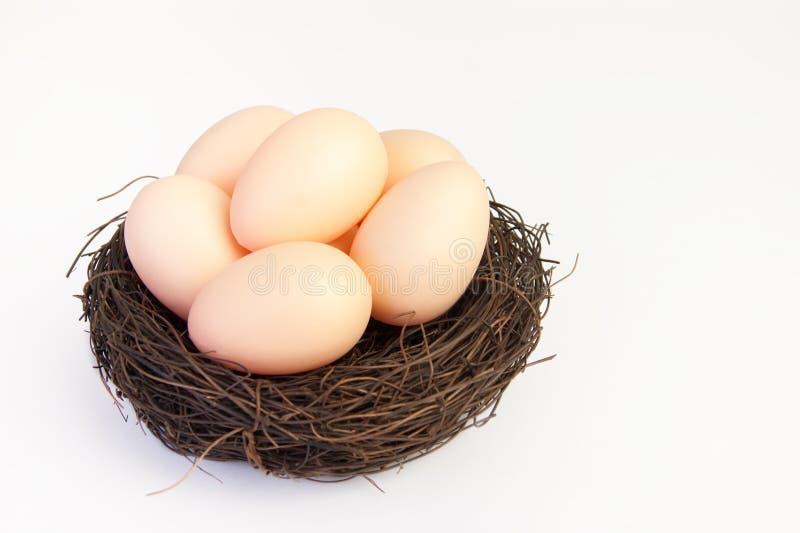 Μπεζ αυγά στη φωλιά των κλάδων στοκ φωτογραφίες