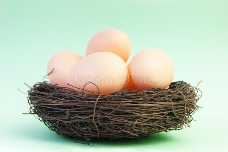 Μπεζ αυγά στη φωλιά των κλάδων στοκ φωτογραφία