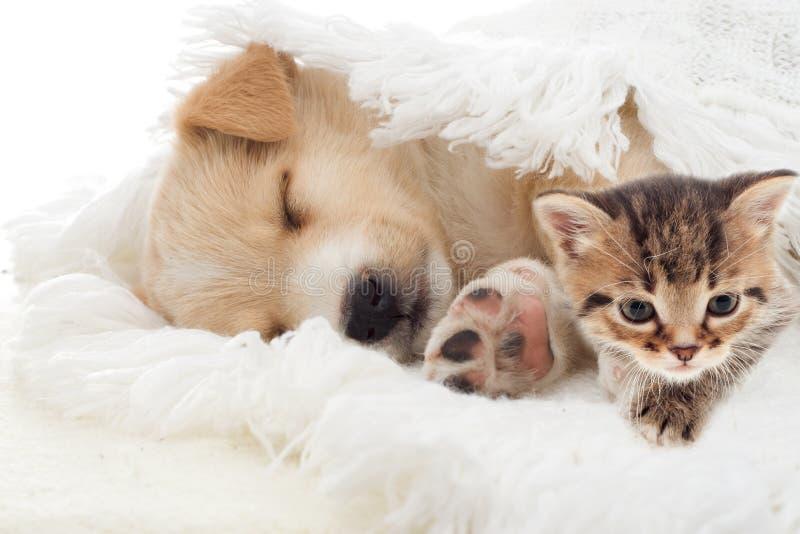 Μπεζ ύπνοι κουταβιών στοκ εικόνες