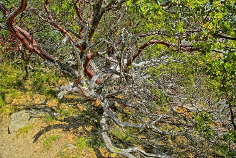 Μπλεγμένη διαδρομή δέντρων στοκ εικόνα