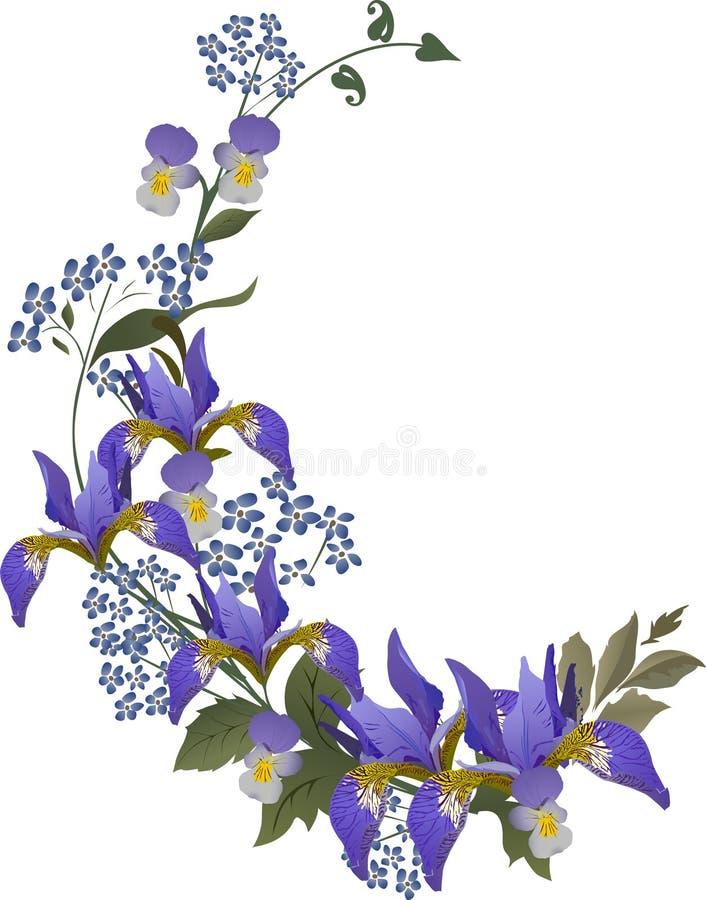 μπλε ίριδα λουλουδιών μ&p διανυσματική απεικόνιση