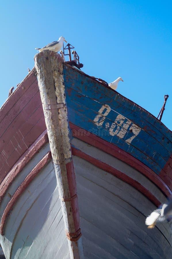 Μπλε αλιευτικά σκάφη και seagull στο λιμένα Essaouira στοκ φωτογραφία