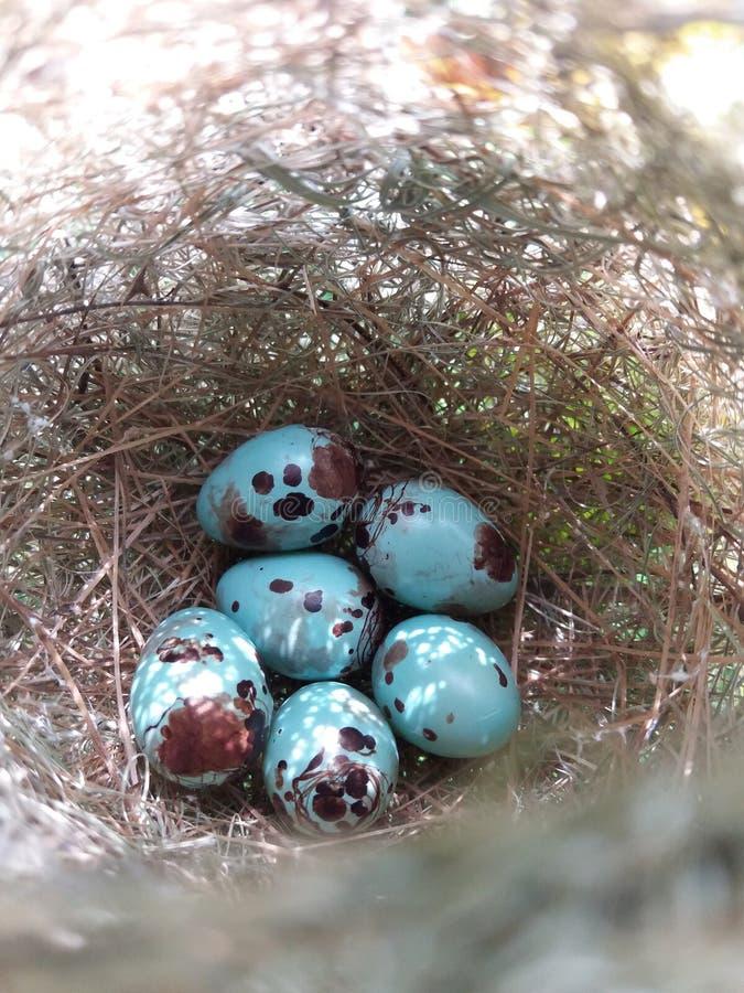 Μπλε αυγό πουλιών στοκ εικόνες