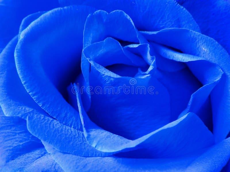μπλε αυξήθηκε στοκ εικόνα