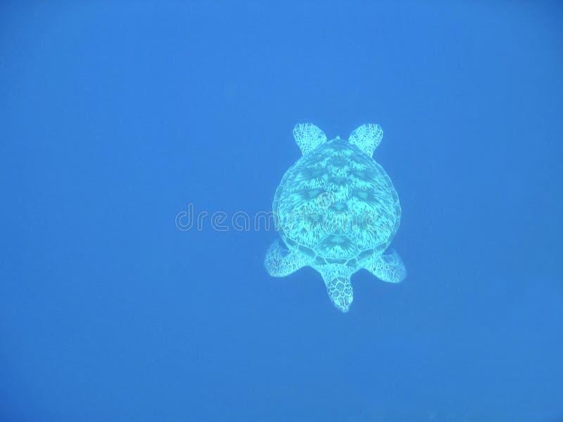 Download μπλε βαθιά χελώνα στοκ εικόνα. εικόνα από hovering, υποβρύχιος - 375289