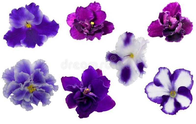 μπλε βιολέτα λουλουδ&i στοκ φωτογραφία με δικαίωμα ελεύθερης χρήσης