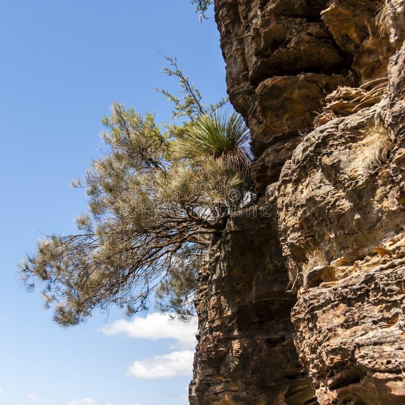 Μπλε Βουνά της Αυστραλίας Κλείσιμο εικόνας Βρίσκεται στο Echo Point Katoomba, Νέα Νότια Ουαλία, Αυστραλία στοκ εικόνες