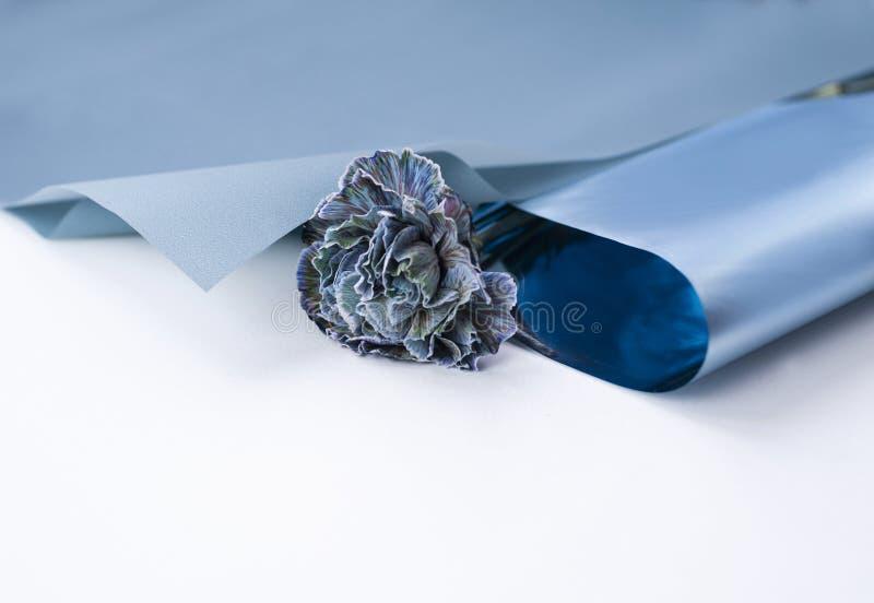 Μπλε γαρίφαλο λουλουδιών λουλουδιών στην μπλε floristic συσκευασία στοκ φωτογραφία με δικαίωμα ελεύθερης χρήσης
