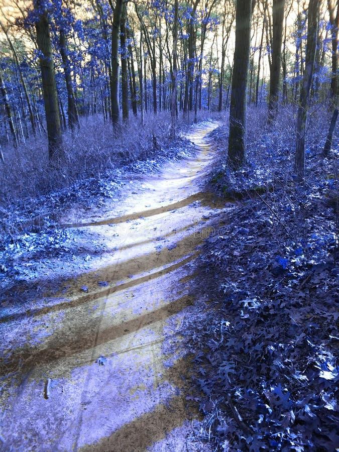 μπλε δάσος στοκ εικόνες με δικαίωμα ελεύθερης χρήσης