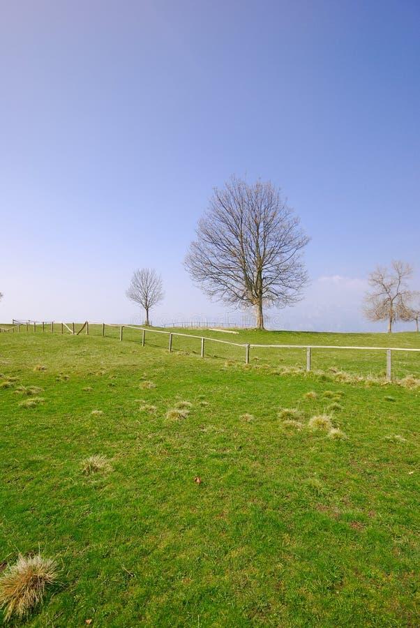 μπλε δέντρο ουρανού χλόης πράσινο στοκ εικόνα με δικαίωμα ελεύθερης χρήσης