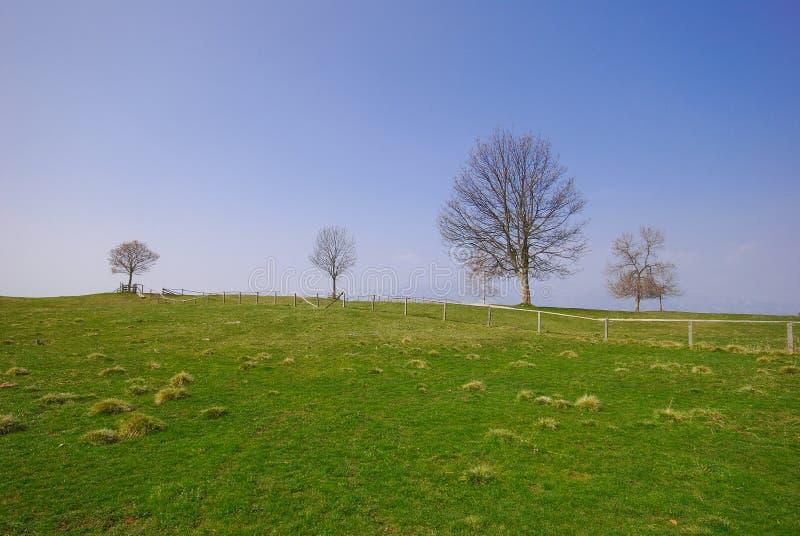 μπλε δέντρο ουρανού χλόης στοκ εικόνα