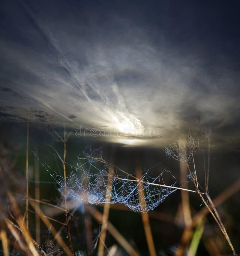 Μπλε δροσοσκέπαστη αράχνη καθαρή και ηλιοβασίλεμα στοκ φωτογραφία με δικαίωμα ελεύθερης χρήσης