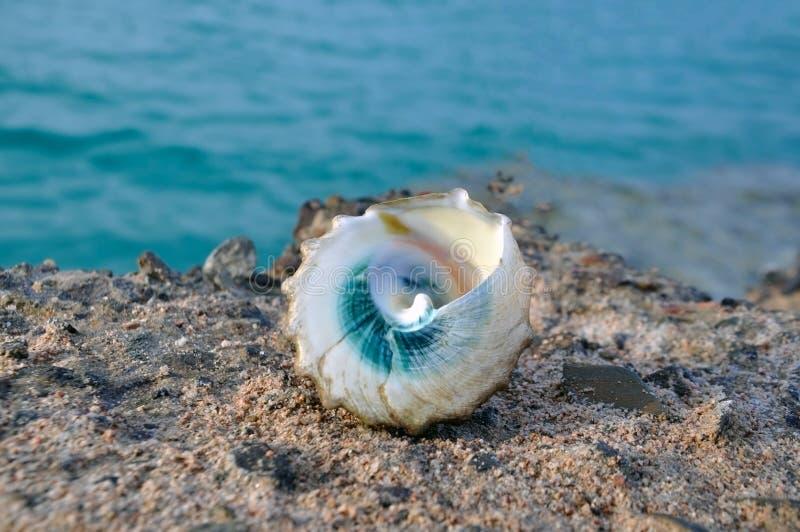 Μπλε θαλασσινό κοχύλι ενάντια στην μπλε θάλασσα στοκ φωτογραφία