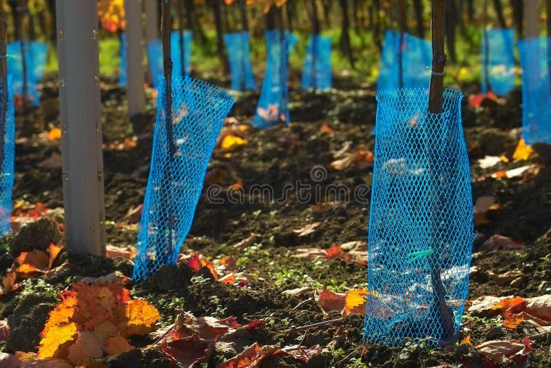 μπλε καθαρή προστασία στοκ φωτογραφίες