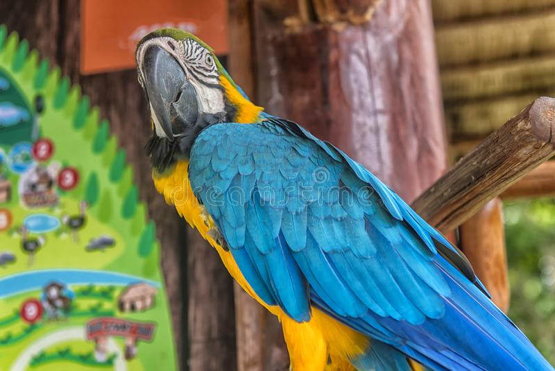 Μπλε και κίτρινο Macaw στη φύση στοκ φωτογραφίες