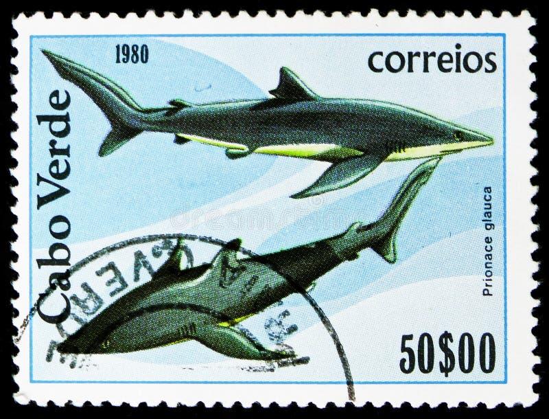 Μπλε καρχαρίας (glauca Prionace), ψάρια serie, circa 1980 στοκ εικόνες