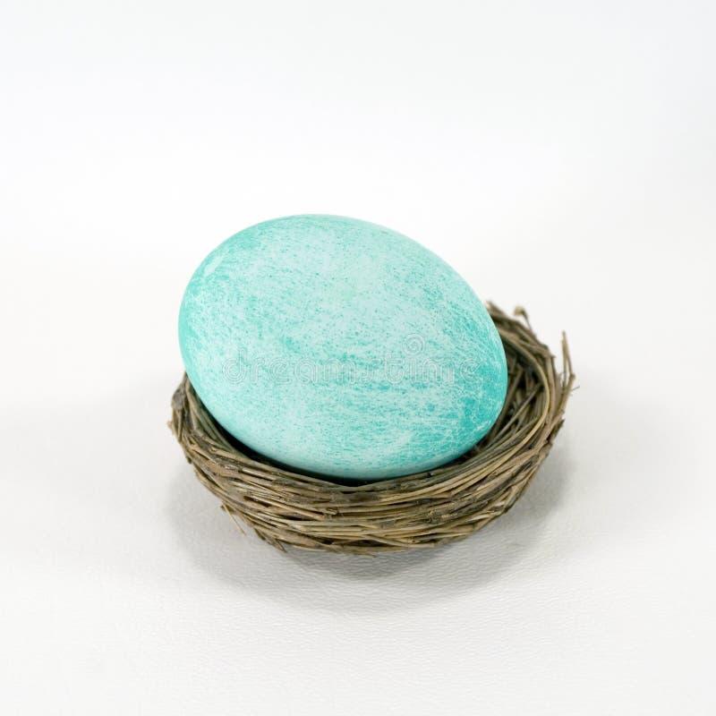 μπλε κιρκίρι φωλιών αυγών π& στοκ εικόνες