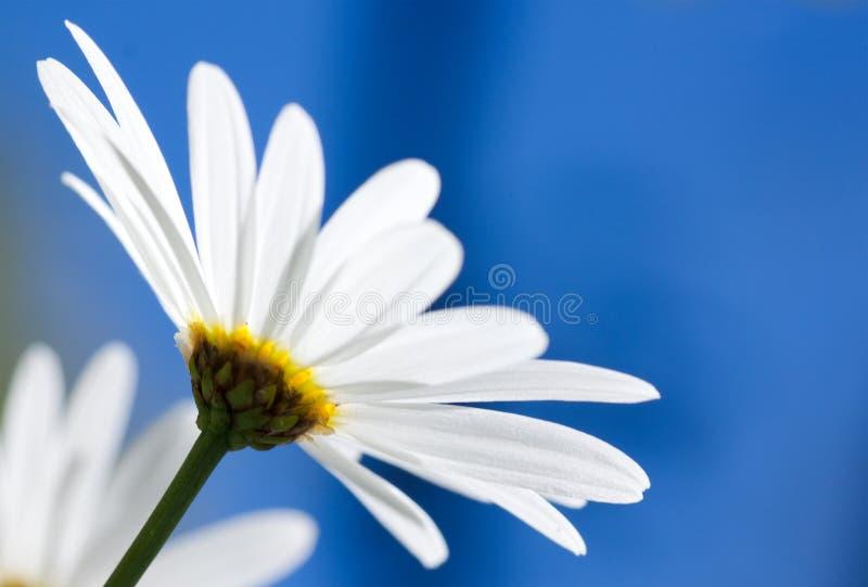 μπλε λευκό ουρανού λο&upsilo στοκ εικόνα με δικαίωμα ελεύθερης χρήσης