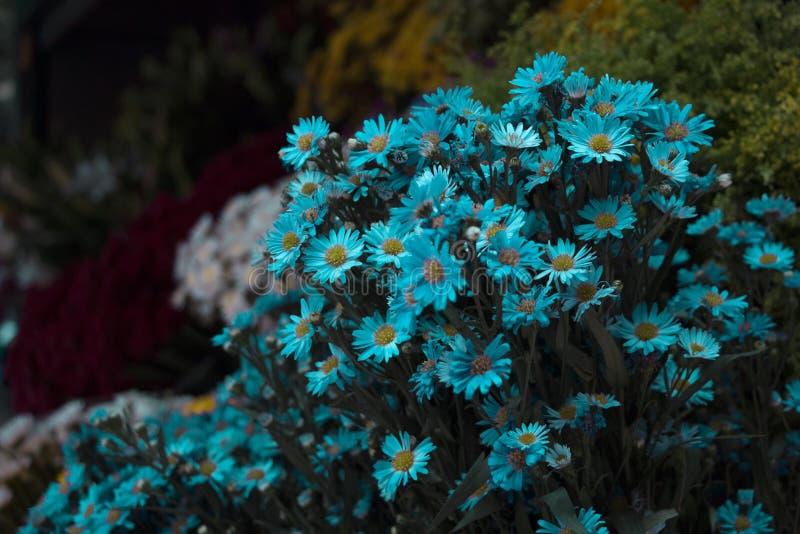 Μπλε λουλούδια στο πάρκο στοκ εικόνα με δικαίωμα ελεύθερης χρήσης