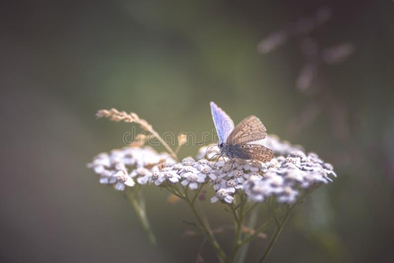 μπλε λουλούδι πεταλούδων στοκ φωτογραφία με δικαίωμα ελεύθερης χρήσης