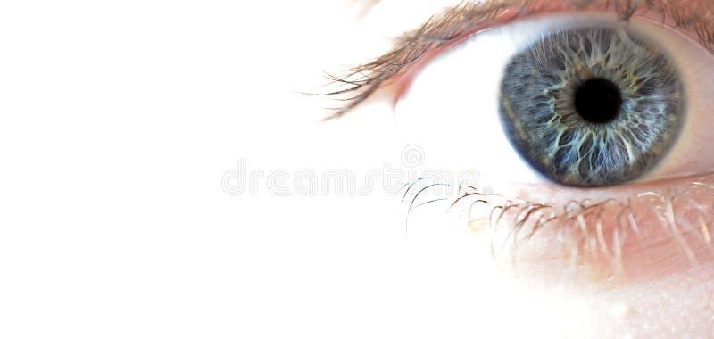 μπλε μακροεντολή ματιών κ στοκ εικόνα με δικαίωμα ελεύθερης χρήσης