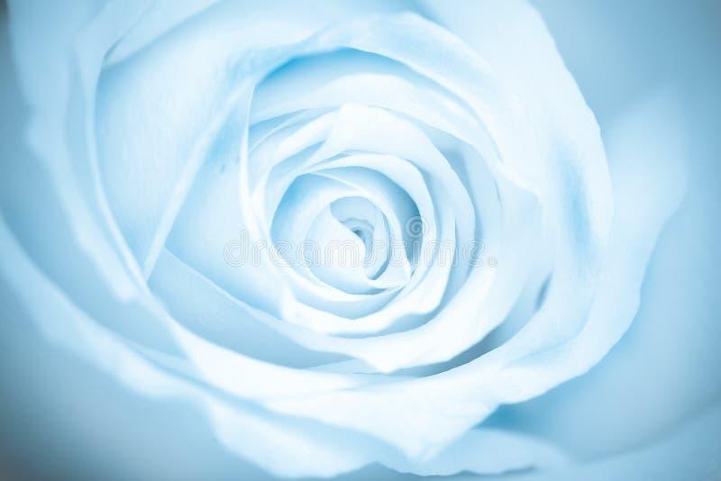 μπλε μακρο αυξήθηκε τον&io στοκ εικόνες