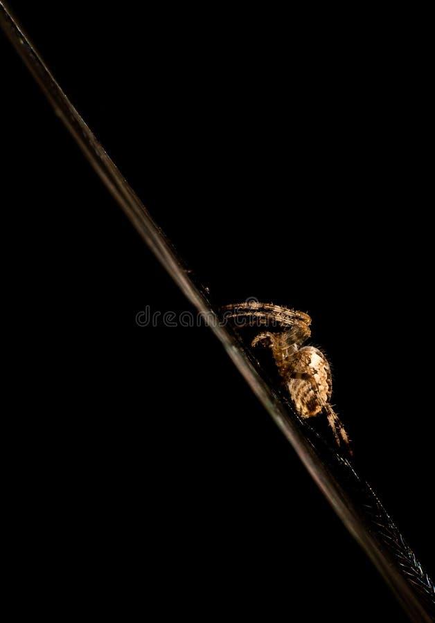 μπλε μαλακός Ιστός απόχρωσης αραχνών στοκ φωτογραφία με δικαίωμα ελεύθερης χρήσης