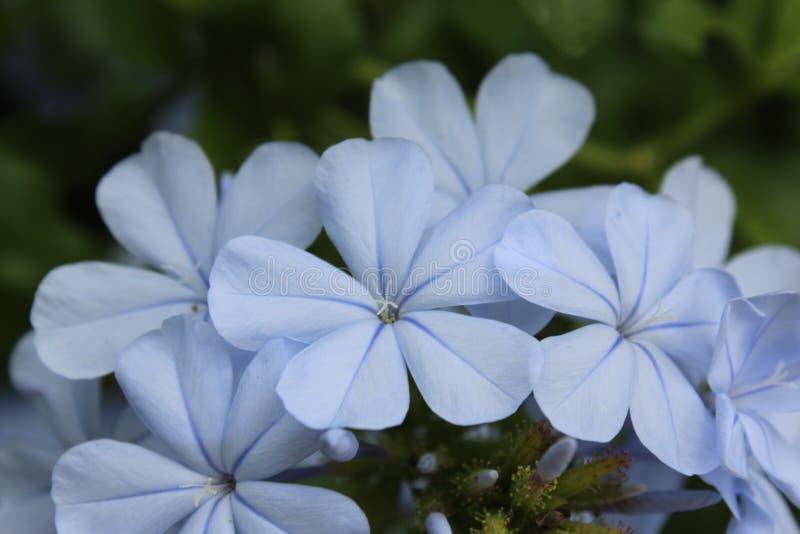 Μπλε μικρά λουλούδια στοκ φωτογραφίες