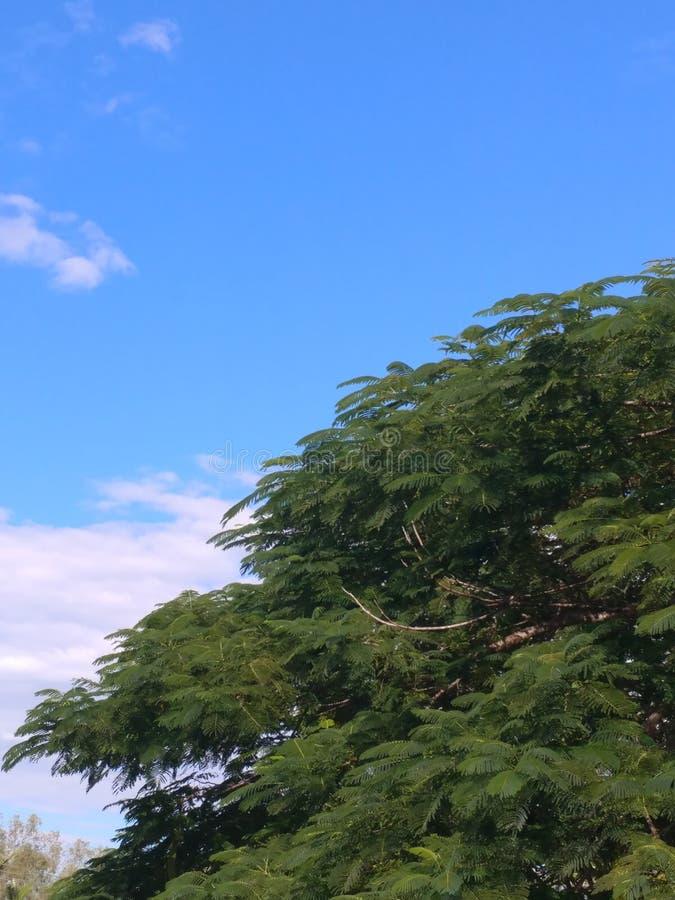 Μπλε ουρανός, άσπρα σύννεφα, πράσινο δέντρο στοκ εικόνες με δικαίωμα ελεύθερης χρήσης