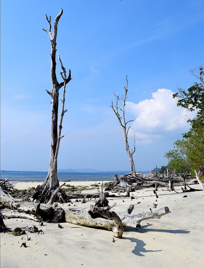 Μπλε ουρανός, άσπρη άμμος, ωκεανός, και πεσμένα γυμνά δέντρα Mohua θάλασσας - νησιά παραλιών ελεφάντων, νησιών Havelock, Andaman  στοκ φωτογραφία με δικαίωμα ελεύθερης χρήσης