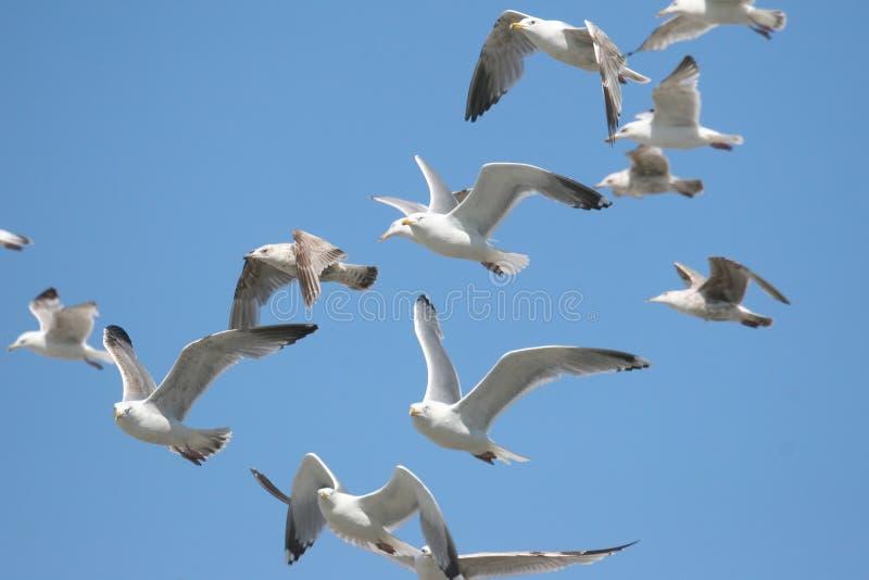 μπλε ουρανός γλάρων