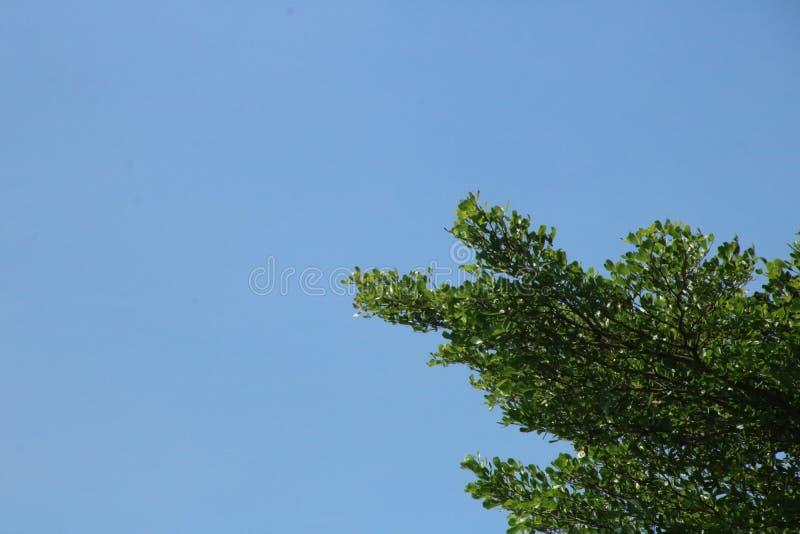 Μπλε ουρανός και μεγάλο δέντρο στοκ φωτογραφία με δικαίωμα ελεύθερης χρήσης