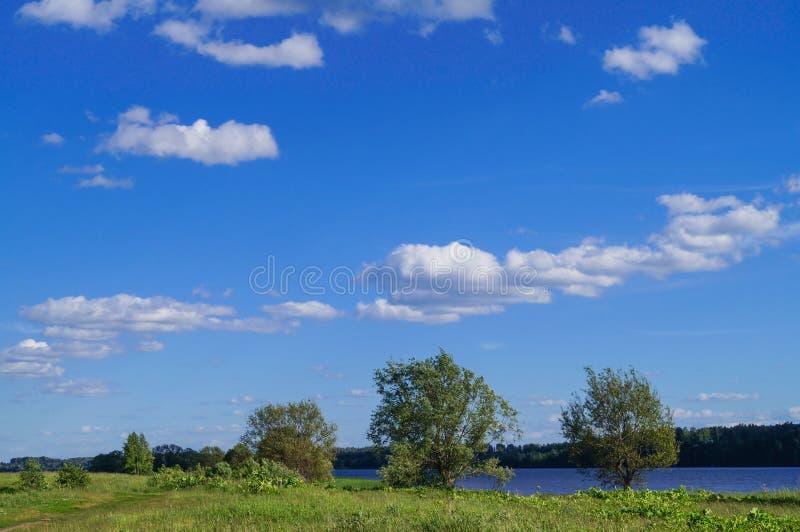 Μπλε ουρανός και όμορφο σύννεφο με το δέντρο λιβαδιών Σαφές υπόβαθρο τοπίων στοκ εικόνα