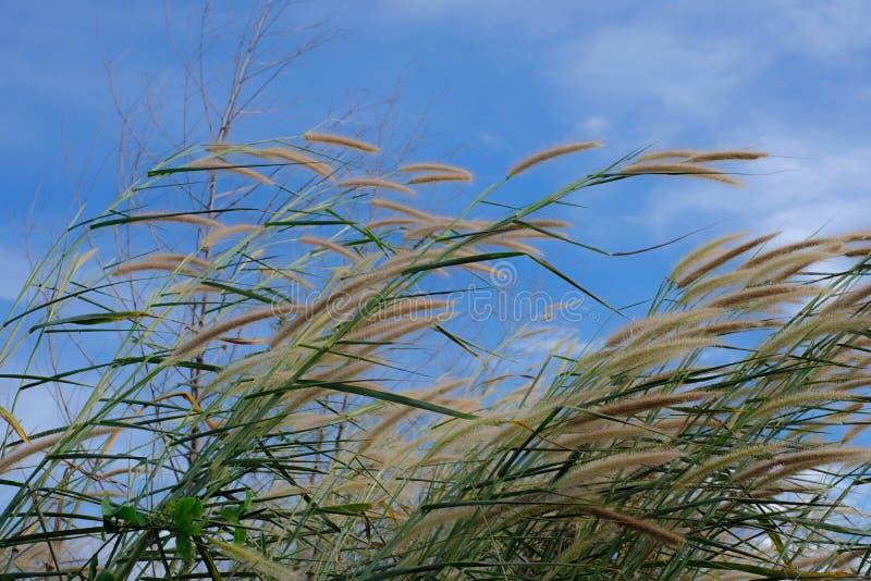 μπλε ουρανός λιβαδιών στοκ φωτογραφία