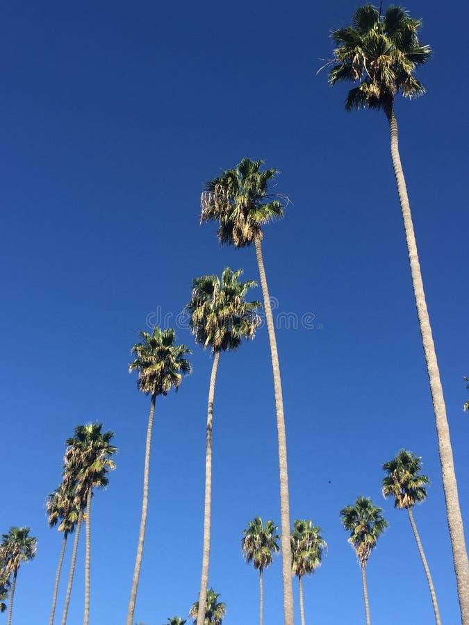 Μπλε ουρανός με τους φοίνικες στοκ εικόνα