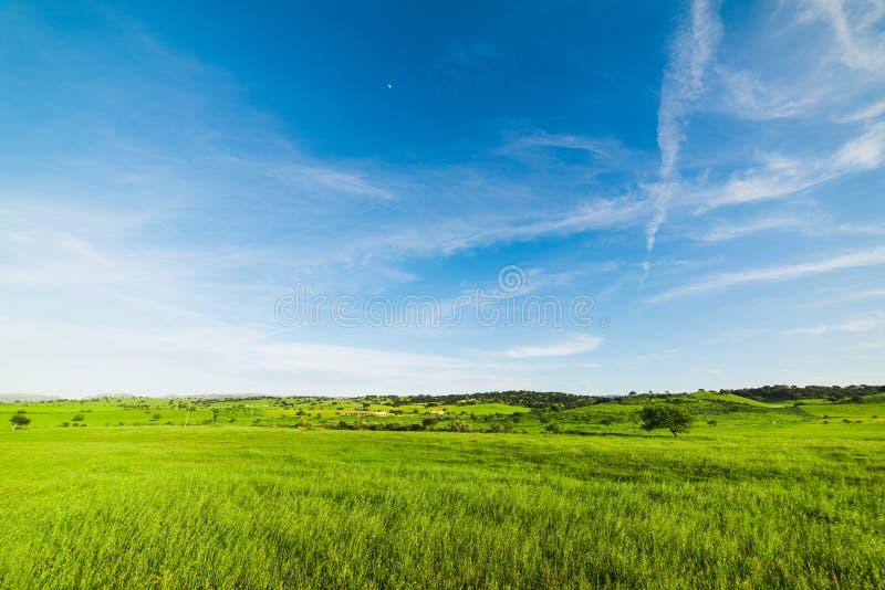 Μπλε ουρανός πέρα από έναν πράσινο τομέα στην άνοιξη στοκ εικόνα με δικαίωμα ελεύθερης χρήσης