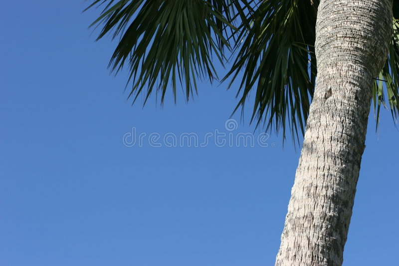 μπλε ουρανός φοινικών treewith στοκ εικόνες