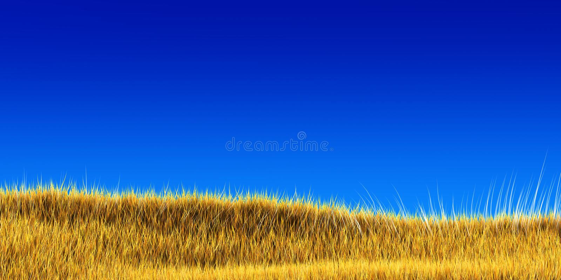 μπλε ουρανός χλόης κάτω απ στοκ φωτογραφία με δικαίωμα ελεύθερης χρήσης