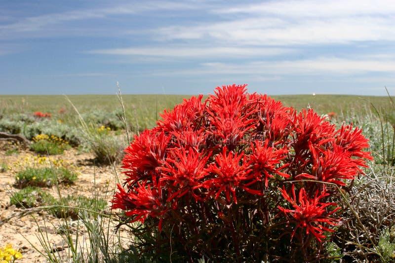 μπλε ουρανός Wyoming πινέλων στοκ εικόνες με δικαίωμα ελεύθερης χρήσης