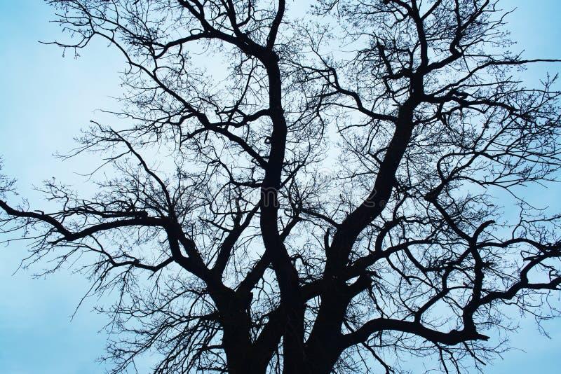 μπλε πέρα από το δέντρο ουρανού στοκ φωτογραφία με δικαίωμα ελεύθερης χρήσης