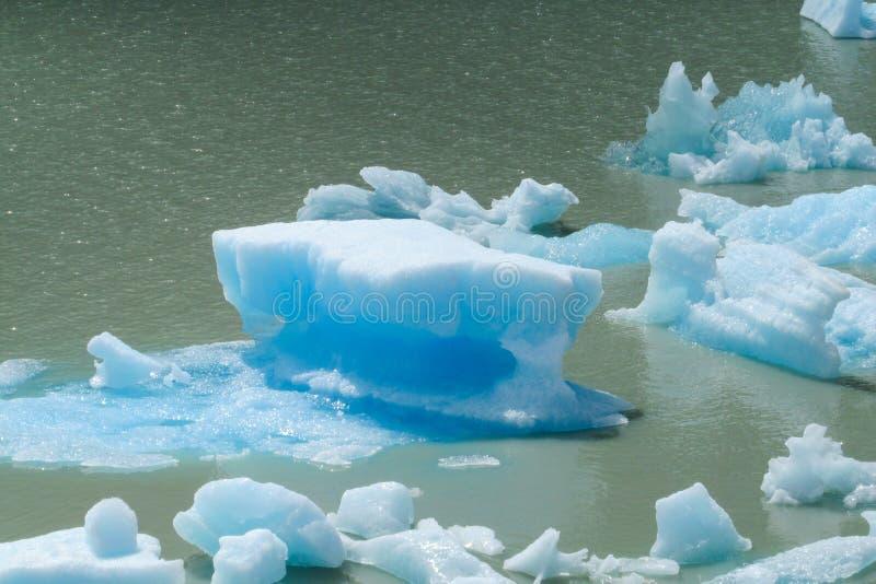 Μπλε παγόβουνα παγετώνων πάγου patagonian στο νερό λιμνών στοκ φωτογραφία με δικαίωμα ελεύθερης χρήσης