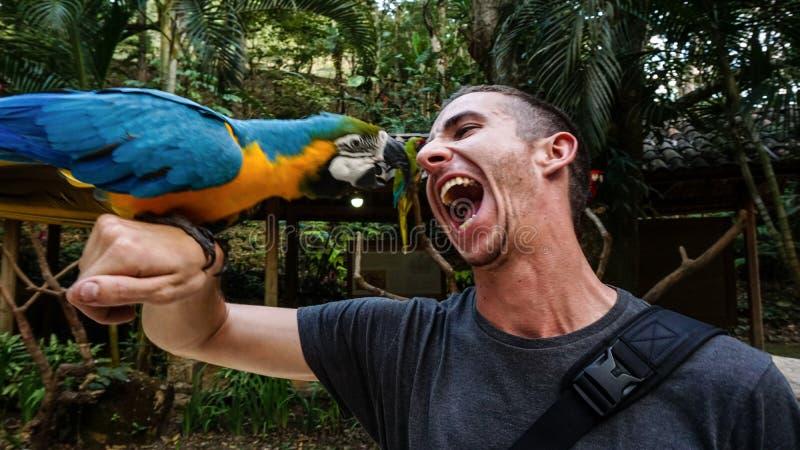 Μπλε παπαγάλος/πουλί Macaw στο βραχίονα ατόμων ` s στο πάρκο πουλιών βουνών Macaw, Ονδούρα στοκ εικόνες